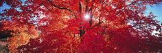 Peter Lik Art Installation - reminds me of Atlanta in the fall (my happy place)