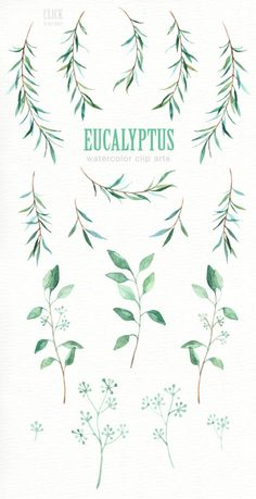 The set of high quality hand painted watercolor Eucalyptus leaf images in bright and fresh color palette. Wreath Watercolor, Watercolor Leaves, Watercolor Art, Vine Drawing, Leaf Drawing, Vine Tattoos, Leaf Clipart, Wedding Clip, Wreath Drawing