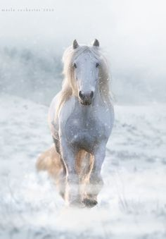 Winter-Horse_2 | Flickr - Photo Sharing!