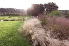 Gossamer Gardens: 11 Ideas for Landscaping with Mexican Feather Grass | Gardenista | Bloglovin'