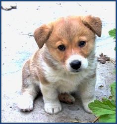 small short haired dog breeds that don't shed | puppies ...