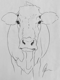 Cow art drawing www hoerskens de – Artofit Animal Paintings, Animal Drawings, Art Drawings, Paintings Of Cows, Cow Paintings On Canvas, Drawing Animals, Cow Drawing, Painting & Drawing, Human Face Drawing