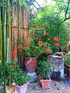 daydream en Provence.   The Transcontinental Affair