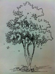 tree renderings: