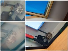 gniazdo os w oknie dachowym na poddaszu #osy #oknodachowe #roto #gniazdoos