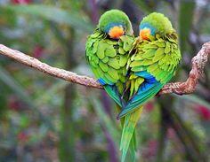 Rengarenk kuşlar