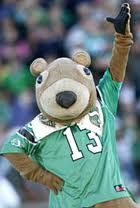 Gainer the Gopher Go Rider, Saskatchewan Roughriders, Rough Riders, Football Art, Green Colors, Cake Pops, Pride, Teddy Bear, Carving