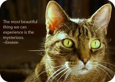 Ever thought there was more to your feline friend than meets the eye? There is. Find out about cat animal symbolism from a broad, cultural perspective here.