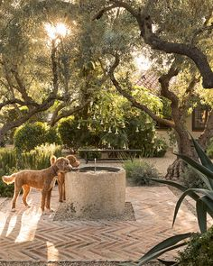 Perfection/ for all my fur babies and future fur babies Dream backyard. olive trees and beautiful landscape Outdoor Rooms, Outdoor Gardens, Outdoor Living, Small Courtyard Gardens, Courtyard Design, Front Courtyard, Courtyard Ideas, Backyard Patio, Backyard Landscaping