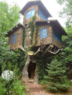 Tree House, Marin, California,USA