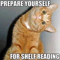 Pictures Gallery of Funny cat photos Silly Cat Pictures: Funny cats Funny Pictures of Cats,Funny Cats Pictures Funny Animals: funny cat. Funny Animals, Cute Animals, Wild Animals, Funniest Animals, Library Humor, Creepy Cat, Funny Cat Photos, Funny Pictures, Angry Pictures