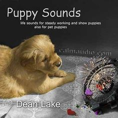 Puppy Sounds CD - whelping box sounds for puppies and conditioning sounds for young puppies Service Dog Training, Dog Training Books, Agility Training For Dogs, Dog Agility, Service Dogs, Puppy Care, Pet Puppy, Shelter Dogs, Animal Shelter