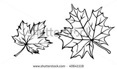 Maple Leaf Tattoo Stock Photos, Images, & Pictures | Shutterstock