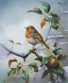 David Finney - Flora Artista e Ilustrador | Estacional