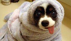 Un cachorrito de ojitos saltones, ¿tierno no?