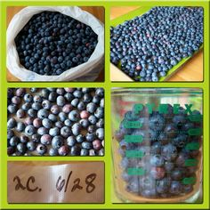 It is time to freeze the blueberries.  Step by step to follow:    DON'T wash them.  The water will freeze on the blueberries and they will be a sloppy mess when you defrost them.  If you feel the need to clean them rub gently between a clean dry dish towel.