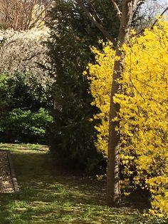 gardens spring time