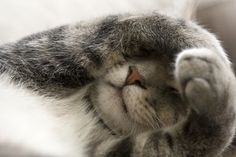 bigstock-Shy-Cat-With-Paws-Over-Face-5203190-300x200