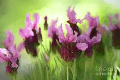 #Painted #Lavender by #Kaye_Menner #Photography Quality Prints Cards Products at: http://kaye-menner.pixels.com/featured/painted-lavender-by-kaye-menner-kaye-menner.html