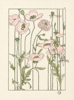 The Pink Poppy.jpg