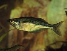 Facts about fish. How do fish swim?see? From the Old Farmer's Almanac. Facts About Fish, Big Aquarium, Old Farmers Almanac, Underwater Life, Fish Swimming, Fishing Gifts, Happy Animals, Pictures Of You, Breathe