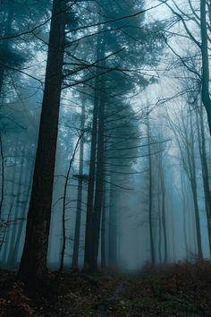Dusk & the Mist  Trojmiejski Park Krajobrazowy, Poland     by Light Charmer  https://www.flickr.com/photos/stray_light_rays/32357178943/