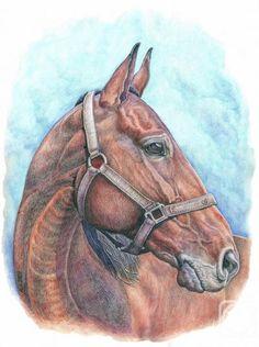 Андрианова Лариса. Колокольный Звон #art #watercolorpencil #drawing #staedtler #horse