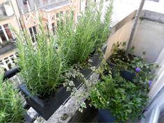 @L'aurey des jardins #Balcon #paris