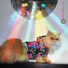 http://www.catmypet.com/jaqueta-colagem-for-pets