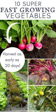 10 super fast growing vegetables for the garden. Get a harvest in as early as 20 days! Find a list of some of the quickest growing crops. #garden #gardening #homegarden Fast Growing Vegetables, Planting Vegetables, Organic Vegetables, Veggies, Vegetable Gardening, Cucumber Varieties, Bush Beans, Growing Seeds, Autumn Garden
