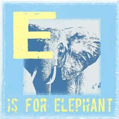 Animal Alphabet E is for Elephant Graphic Art on Wrapped Canvas