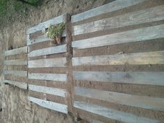 Pallet Garden for Onion Rows