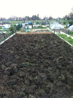 ( febbraio 2016) Ho lavorato il terreno appena ci è stato assegnato l'orto a Villa Bernaroli.  - eliminata erba con zappetta              - vangatura 30-40 cm