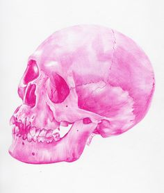 A skull that has been drawn in a pink ballpoint pen by Paul Alexander Thornton. In this picture I love the vibrant colour he used. Illustrations, Illustration Art, Creative Illustration, Biro Art, Crane, Png Transparent, Ballpoint Pen Drawing, Rosa Pink, Pink Skull
