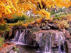 Fall 2009, Chicago Botanic Garden