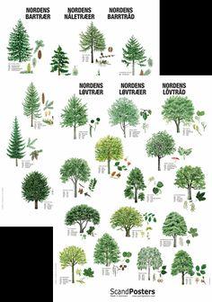 Nordens Træer Plakatsæt