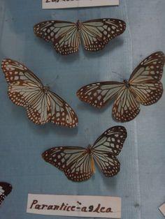 Bengal Natural History Museum, Darjeeling