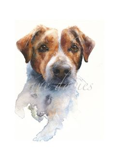 jack russell terrier, a watercolour painting by artist jane davies