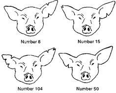 Chapter 4: The pig