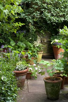 Terracotta pots on York stone paving, filled with evergreens and shade loving perennials