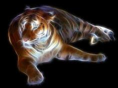 animal fractals   Downloads