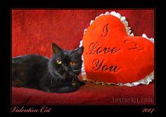Valentine Cat ~ 2014 LuvFurArt.com