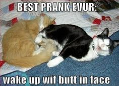 funny cats pictures ever | Cat Pranks – Cats Cuddling