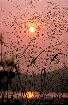 Sunrise Through The Tall Grass Canvas Print / Canvas Art by Thomas Firak Beautiful World, Beautiful Places, Beautiful Pictures, All Nature, Ciel, Belle Photo, The Great Outdoors, Wonders Of The World, Mother Nature