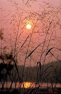 ✯ Sunrise Through Tall Grass