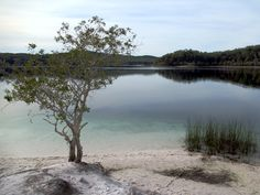 The crystal clear waters of Lake McKenzie in the center of Fraser Island, South Queensland, Australia, are ringed by white sand beaches. Fraser Island, Crystal Clear Water, Queensland Australia, White Sand Beach, Cairns, Brisbane, Beaches, River, Outdoor