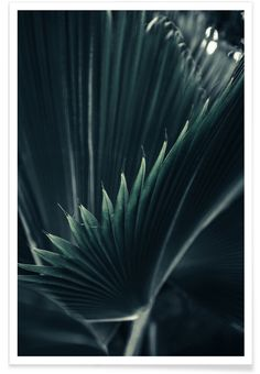 Palm Shade 1 als Premium Poster von Christoph Abatzis | JUNIQE