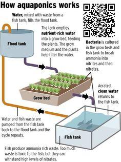 #aquaponics How it works