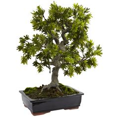 Transform any space into a relaxing retreat with the Nearly Natural Artificial Giant Podocarpus Mossed Bonsai Tree. Perfect next to a bright window, the ornate tree is topped with podocarpus foliage and surrounded by lifelike moss. Bonsai Tree Types, Indoor Bonsai Tree, Indoor Plants, Bonsai Trees, Bonsai Art, Bonsai Plants, Bonsai Garden, Ficus, Artificial Tree