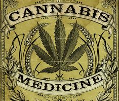 Strain Type is a cannabis breeder chosen specifically by Seedsman for the quality of their marijuana seeds. Cannabis Plant, Cannabis Cultivation, Stoner Art, Weed Art, Pics Art, Vintage Posters, Vintage Ads, Camping Survival, Chicano Art